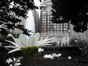 Alicegipsonphotographs Art - Flower In The City by Alice Gipson