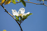 Florida Florals Photos - Flower in the sun by Jessica Brown