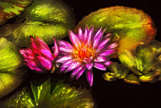 Magenta Photos - Flower - Lotus - Soaking in Sunlight by Mike Savad