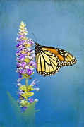 Danaus Plexippus Prints - Flower Love Print by Betty LaRue