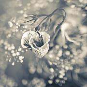 Flower Print by Mark-Meir Paluksht