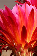 Wendi Evans Art - Flower of Flames by Wendi Evans