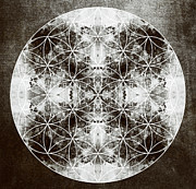 Sacred Geometry Posters - Flower of Life s Poster by Filippo B