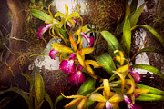 Moist Prints - Flower - Orchid - Cattleya - Theres something about orchids  Print by Mike Savad