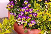 Monkey Prints - Flower - Pansy - Purple Posies  Print by Mike Savad