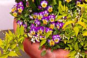 Mike Savad - Flower - Pansy - Purple Posies
