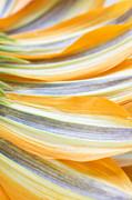 Mythja  Photography - Flower petals background