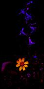 Atom Crawford - Flower Power
