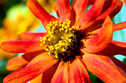Macro Flower Photography Prints - Flower Power Print by Terry Elniski