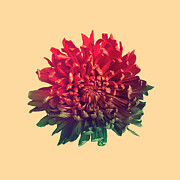 Red Flower Digital Art - Flower prints by Budi Satria Kwan