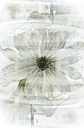 Black And White Mixed Media Acrylic Prints - Flower Reflection Acrylic Print by Frank Tschakert