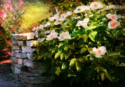 Spring Scenes Art - Flower - Rose - By a wall  by Mike Savad