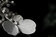 Nathan Larson - Flower Scuplture 1