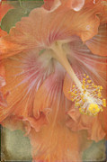 Pink Hibiscus Posters - Flower Showers Poster by Sharon Mau