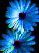 Daisies Art - Flower Study 4 - Vibrant Blue by Sharon Cummings by Sharon Cummings