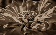 Ray Congrove - Flower Toned