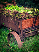 Cart Photo Prints - Flower Wagon Print by Edward Fielding