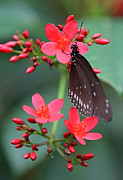 Florida Flower Prints - Flower with Butterfly Print by Juergen Roth