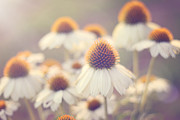 Cone Flower Prints - Flowerchild Print by Amy Tyler