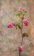 Texture Floral Prints - Flowering Currant Print by Angie Vogel