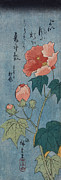 Woodblock Posters - Flowering Poppies Tanzaku Poster by Ando Hiroshige