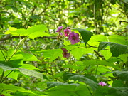 Raspberry Photo Originals - Flowering Raspberry by Gene Cyr