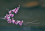 Kay Lovingood - Flowering Tree