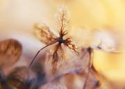Flowers 3 Print by Justyna Jaszke