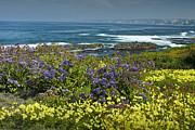 Randall Nyhof - Flowers along the shore at La Jolla  California No.0202