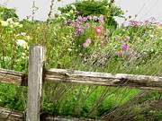 Flowers And Fences Print by Marilyn Smith