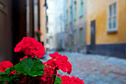 Conceptual Art - Flowers and old buildings in Stockholm by Michal Bednarek