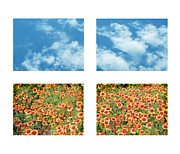 White Red And Yellow Prints - Flowers and Sky Print by Ann Powell