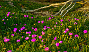 Big Sur Beach Originals - Flowers at Julia Pfeiffer State Beach Big Sur by Jeff Black