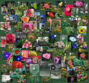 Coller Posters - Flowers Collage Square Poster by Thomas Woolworth