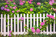 Pretty Flowers Photos - Flowers - Floral - White Picket Fence by Gary Heller