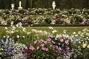 Gouzel - - Flowers
