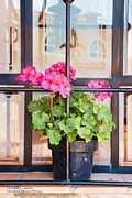 Windowsills Posters - Flowers in a Mexican Window Poster by David Perry Lawrence