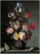 Carnation Painting Prints - Flowers in a Vase with Shells and INsects Print by Balthasar Van Der Ast