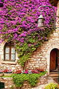 Provence Village Framed Prints - Flowers in Eze Framed Print by Brian Jannsen