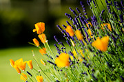 Nature Study Photo Prints - Flowers in France Print by Alan Roberts