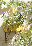 Saint-remy De Provence Prints - Flowers in Saint Remy Print by Chris Pinard