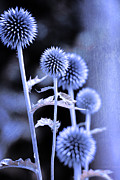 Flower Design Photo Originals - Flowers in the metal by Tommy Hammarsten
