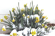 Eddie Armstrong Art - Flowers in the Snow by Eddie Armstrong