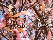 Van Ness - Flowers in the Tree in...