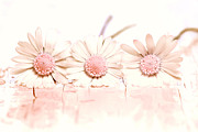 Bellis Prints - Flowers Print by Jana Behr