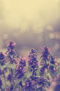 Flowers Print by Jelena Jovanovic