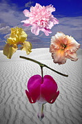 Flowers Of Fantasy Print by ImagesAsArt Photos And Graphics
