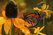 Monarchs Prints - Flowers of the Day Print by Donna Kennedy