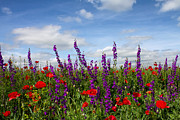 Flowers Of The Field Print by Diana Kraleva