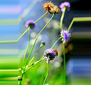 Pasture Herb Prints - Flowers on summer meadow Print by Tommy Hammarsten